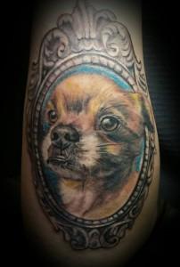 perro brazo