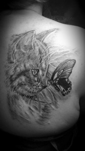 gatito mariposa