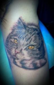 gato bis