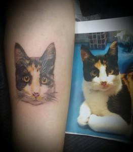 gato bis bis
