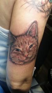 gato brazo
