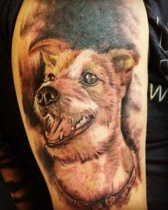 Perro en brazo